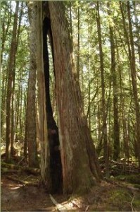 Sechelt Groves Society